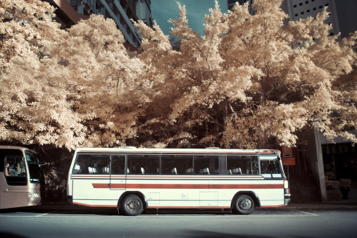 Cherry Blossoms「Trees and tour buses」:スマホ壁紙(11)