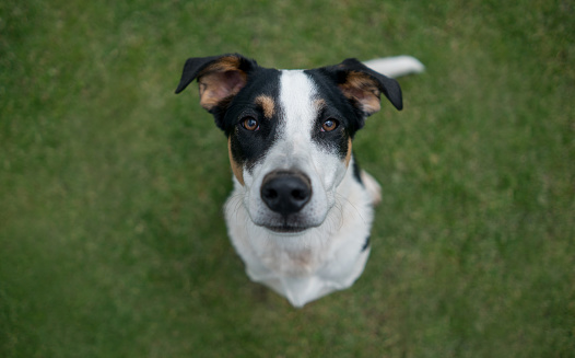Looking At Camera「Mutt dog outdoors」:スマホ壁紙(11)