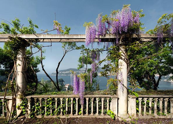 Villa「Garden Of The Villa Ephrussi De Rothschild」:写真・画像(3)[壁紙.com]