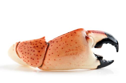 Claw「Florida Stone Crab」:スマホ壁紙(10)