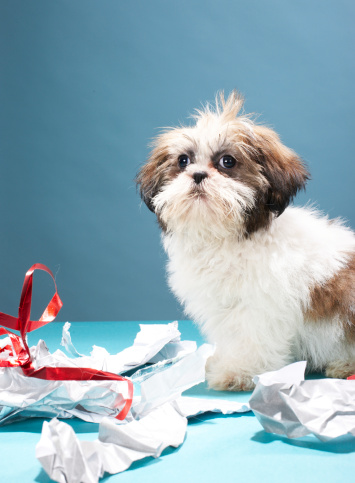 Mischief「Puppy with ripped wrapping paper」:スマホ壁紙(4)