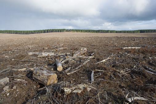 Log「Bare logging forest, Australia」:スマホ壁紙(9)