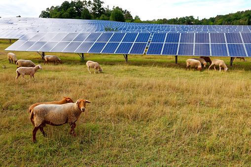 Power Equipment「solar power station with sheep」:スマホ壁紙(1)