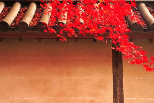 紅葉「Autumnal Maple Tree at Nison-in Temple」:スマホ壁紙(13)