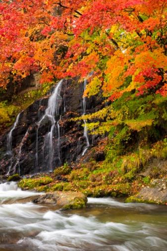 紅葉「Autumnal maple trees and the Nakano river. Aomori Prefecture, Japan」:スマホ壁紙(3)