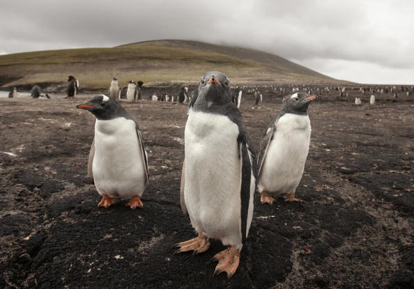 Island「The Falkland Islands - 25 Years After The War」:写真・画像(4)[壁紙.com]
