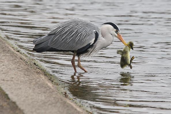 Aquatic Organism「Early Morning Visitors To Hyde Park」:写真・画像(9)[壁紙.com]