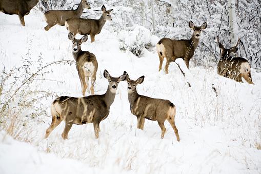 Doe「Deer on snow covered mountain」:スマホ壁紙(12)