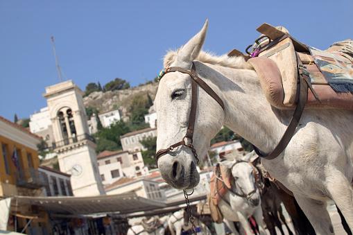 Pack Animal「Mules in Greek Island Town of Hydra」:スマホ壁紙(16)