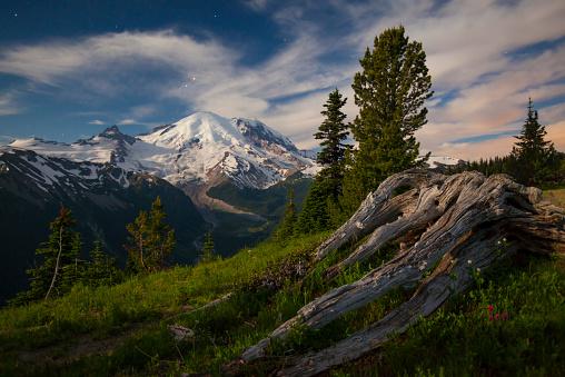 レーニア山国立公園「An old large stump lies in an alpine meadow in Mount Ranier National Park.」:スマホ壁紙(9)
