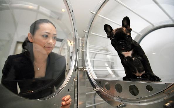 東京「Oxygen Capsules Used To Relax Pets」:写真・画像(15)[壁紙.com]