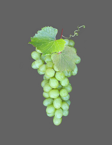Temptation「Organic white grapes on grey.」:スマホ壁紙(15)