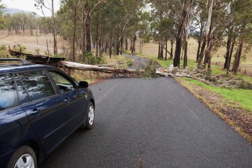 Fallen Tree「a car stopped where a tree has fallen across a road」:スマホ壁紙(6)