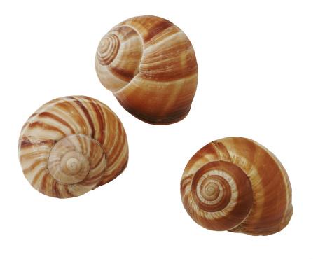 カタツムリ「Mollusk shells」:スマホ壁紙(5)