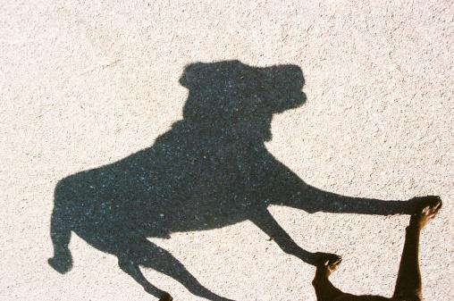 Walking「USA, Utah, Salt Lake City, Shadow of dog」:スマホ壁紙(4)