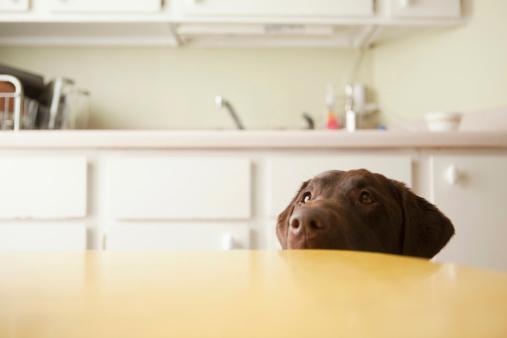 Pets「USA, Utah, Salt Lake City, Dog's head emerging from beneath table」:スマホ壁紙(1)