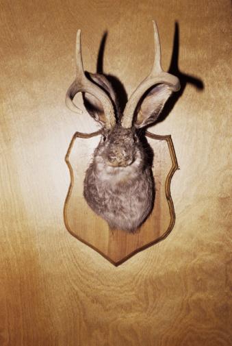 ガラス「Stuffed and mounted animal head」:スマホ壁紙(16)