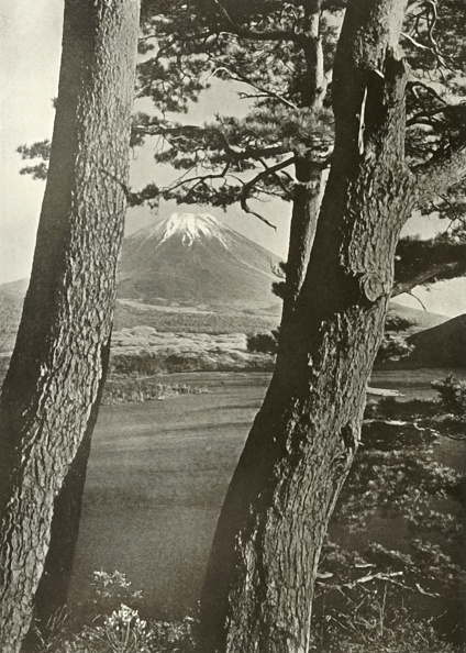 Plant Bark「Fuji Through The Pines Of Lake Motosu」:写真・画像(10)[壁紙.com]
