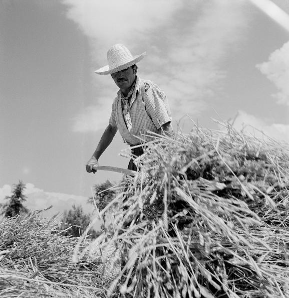 Archivio Cameraphoto Epoche「Portogruaro Mechanical Harvesting」:写真・画像(19)[壁紙.com]