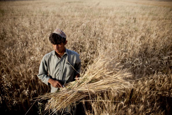 Kabul「Wheat Continues As A Major Crop In Afghanistan」:写真・画像(18)[壁紙.com]