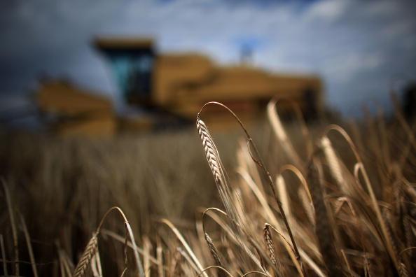 Barley「UK Food Industry Warning On Domestic Food Production」:写真・画像(6)[壁紙.com]