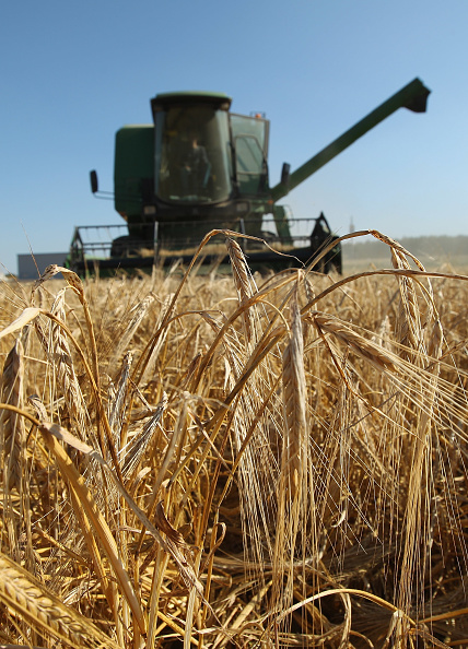Grass Family「Farmers Conclude Grain Harvest」:写真・画像(15)[壁紙.com]