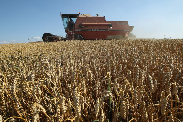 Wheat「Farmers Conclude Grain Harvest」:写真・画像(11)[壁紙.com]