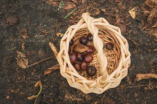 栗「Basket with chestnuts」:スマホ壁紙(8)