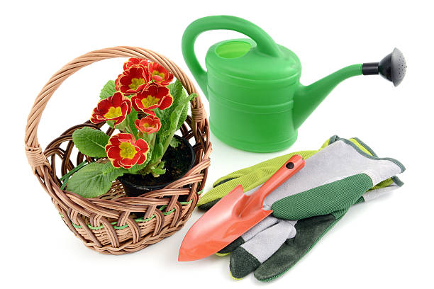 Basket with Flowerpot of primroses and gardening tools:スマホ壁紙(壁紙.com)