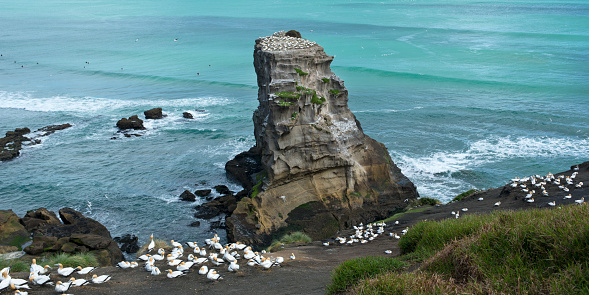 Wave「Gannet Rock at Otakamiro Point, Muriwai Beach.」:スマホ壁紙(17)