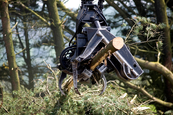Wood - Material「Timber Harvesting, Carmarthenshire Forestry, Dyfed, Wales, UK.」:写真・画像(16)[壁紙.com]