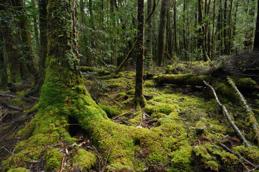 Moss「Franklin-Gordon Wild Rivers National Park」:スマホ壁紙(4)