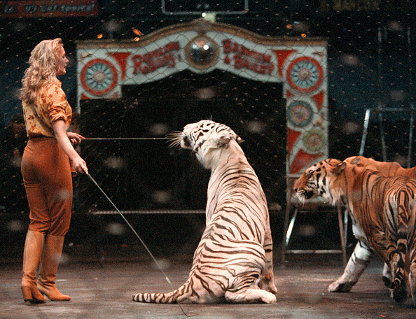 Circus「Youngest Woman Tiger Tamer」:写真・画像(8)[壁紙.com]