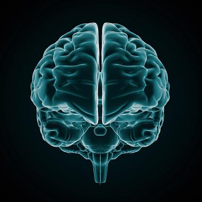Cerebellum「An x-ray of the human brain on a black background」:スマホ壁紙(6)