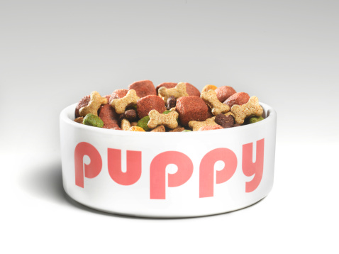 Baby animal「Puppy's feeding bowl with food」:スマホ壁紙(7)