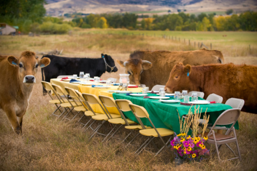 Three Quarter Length「curious cows and outdoor dinner table」:スマホ壁紙(19)
