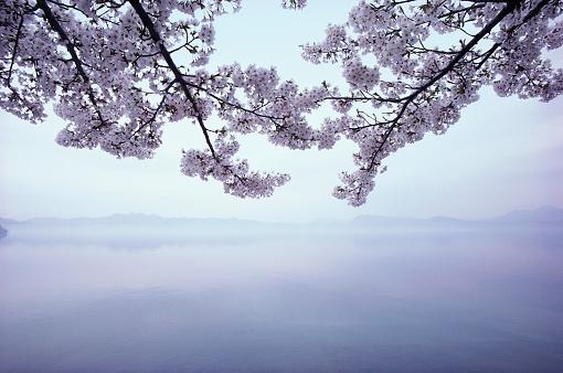 Cherry Blossoms「Lake Tazawa and Cherry Blossoms」:スマホ壁紙(13)
