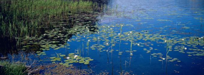 Water Lily「Water side Vest-Agdar, Norway」:スマホ壁紙(5)