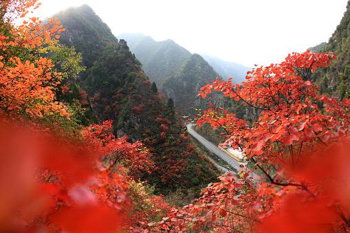 紅葉「Autumn in Lushi County of Henan Province,China」:スマホ壁紙(1)