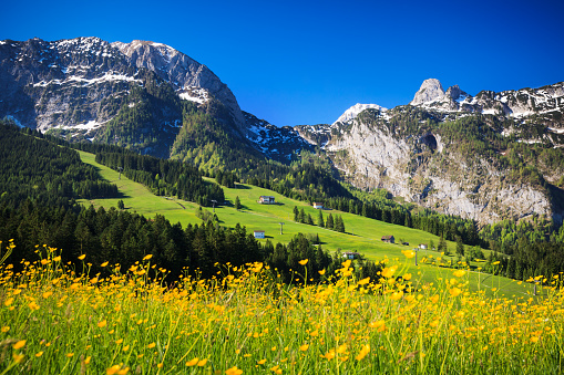 European Alps「Alpen Landscape - Green Field Meadow full of spring flowers - selective focus (For diffrent focus point check the other images in the series)」:スマホ壁紙(16)