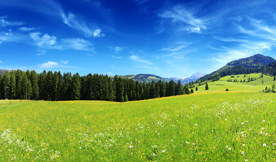 European Alps「Alpen Landscape - Green Field Meadow full of spring flowers」:スマホ壁紙(19)