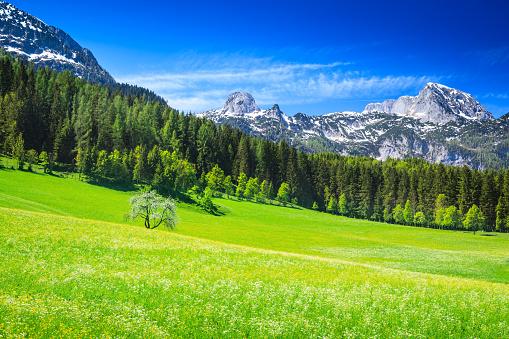 European Alps「Alpen Landscape - Green Field Meadow full of spring flowers」:スマホ壁紙(3)