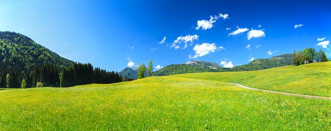 Salzkammergut「Alpen Landscape - Green Field Meadow full of spring flowers」:スマホ壁紙(12)
