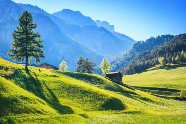 Alpen Landscape - Green Field Meadow full of spring flowers:スマホ壁紙(壁紙.com)