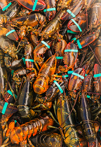 St「USA, Maine, St. George, Full frame of fresh lobsters」:スマホ壁紙(13)