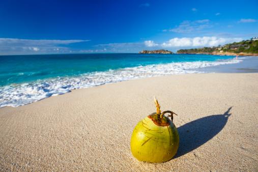 リーワード諸島 アンティグア「ココナッツ、カリブ海のビーチ」:スマホ壁紙(8)