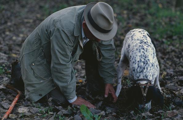 Piedmont - Italy「White Truffle Hunting」:写真・画像(8)[壁紙.com]
