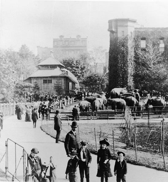 マンハッタン セントラルパーク「Children In Central Park Zoo」:写真・画像(2)[壁紙.com]