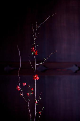Wabi Sabi「Japanese Quince (Chaenomeles speciosa), close-up」:スマホ壁紙(3)