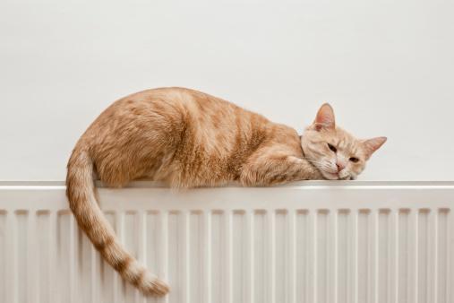 トラ猫「のんびりと猫」:スマホ壁紙(17)